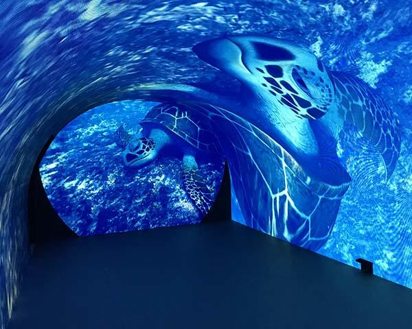 led curved projection screen for sale for commercial amusement